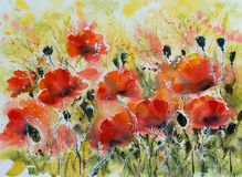 Red poppy flowers watercolors painted Royalty Free Stock Image