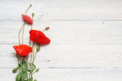 Red poppy flowers bouquet on white rustic wood. Royalty Free Stock Photo