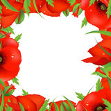 Red Poppy Frame Royalty Free Stock Photography