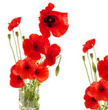 Red Poppy in a glass Royalty Free Stock Photos