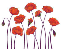 Red poppy. Hand drawn vector image of stylized red poppy flowers isolated on white background Royalty Free Stock Photo