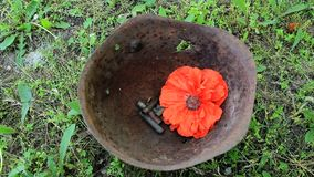 Red poppy on the helmet stock video footage