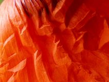 Red poppy leaf detail #3 Stock Photo