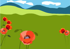 Red poppy on the meadows Royalty Free Stock Photography