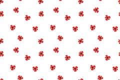 Red Poppy National flower of Belgium, Poland Albania royalty free illustration