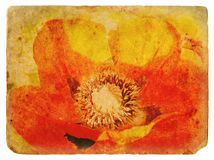Red Poppy. Old postcard Royalty Free Stock Photos
