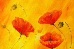 Red poppy on orange background. Red flower on abstract color background. Red poppies Stock Photos