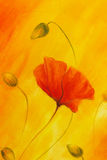 Red poppy on orange background. Red poppies. Red flower on abstract color background Stock Image