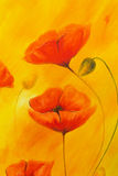 Red poppy on orange background. Red poppies. Red flower on abstract color background Stock Photography