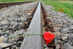 Red poppy on railways Stock Photography