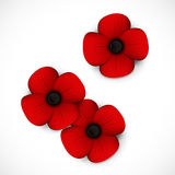 Red poppy remembrance day. A red poppy remembrance day Royalty Free Stock Photography
