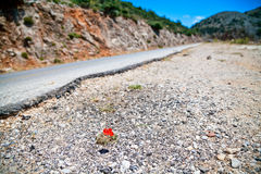 Red poppy on the roadside Royalty Free Stock Photography