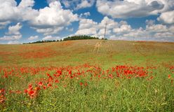 Red poppy's field under blue sky with clouds Stock Image