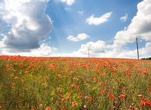 Red poppy's field under blue sky with clouds Stock Photos