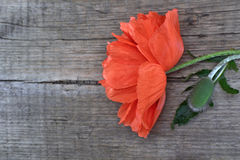 Red poppy. On a wooden board stock photography