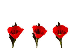 Red Popy Flowers Royalty Free Stock Photo