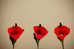 Red Popy Flowers Royalty Free Stock Photos