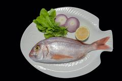 Red porgy as known as sea bream with rockets leaves served on white plate royalty free stock image