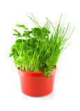 Red pot with different herbs Royalty Free Stock Photo