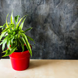 Red pot with green plant on table. Royalty Free Stock Photos