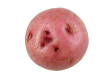 Red potato Royalty Free Stock Photography