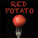 Red potato on black background Royalty Free Stock Photo