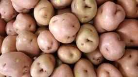 Red potato, Solanum tuberosum Stock Image