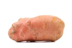 Red potato tuber. Royalty Free Stock Photography