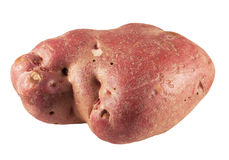 Red potato Stock Images