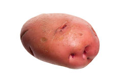 Red potato Royalty Free Stock Images