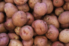 Red potatoes. Bunch of organic red potatoes Royalty Free Stock Photos