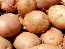 Red potatoes. Some red potatoes exposed on market ready to be sell Stock Image