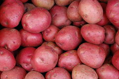 Red Potatoes. A pile of red potatoes for sale in the market Stock Image