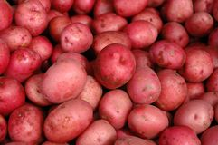 Red Potatoes. Bulk red potatoes Stock Photography