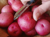 Red potatoes. Ready to be peeled Stock Photos