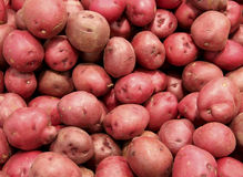 Red potatoes background Royalty Free Stock Images