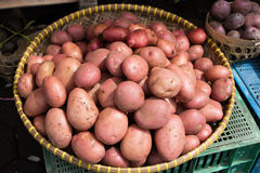 Red potatoes in a basket. Shining by the morning sun in a horizontal format Stock Images