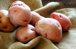 Red Potatoes on Burlap Royalty Free Stock Photography