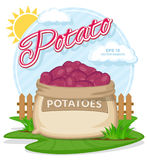 Red Potatoes in burlap sack. Full sacks with fresh vegetables. Vector illustration of eco products. Red Potatoes in burlap sack. Full sacks with fresh vegetables Royalty Free Stock Photo