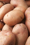 Red Potatoes Close Up Stock Photography