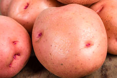 Red potatoes close up macro Stock Photos