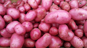 Red Potatoes Full image, background,. Organic Red potatoes at farmers market ready to sell, full image, background Stock Photo