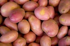 Red potatos Royalty Free Stock Images