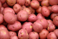 Red Potatos. Detail of Fresh Red Potatos Stock Photos