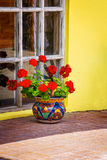 Red Potted Geranium Royalty Free Stock Images
