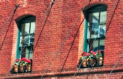 Red potted geraniums on window sills. Clay potted red geraniums sit on window sills of a Red brick building Royalty Free Stock Image