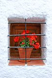Red potted plant on window sill with bars Royalty Free Stock Image