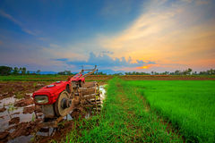 Red power tiller in rice field Royalty Free Stock Photos