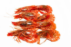 Red prawns cooked. Spanish food and culture Stock Images