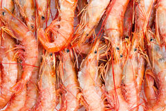Red prawns market Royalty Free Stock Image